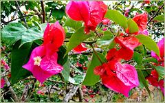 Ilhéus : la natura tropicale