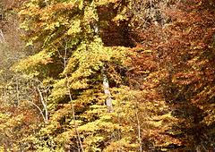 Goldener Herbst im Sonnenlicht