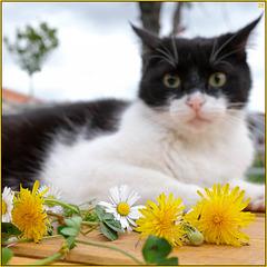 l'apprenti fleuriste