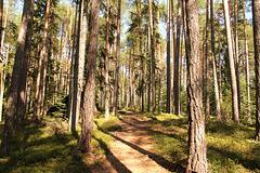 Lichter Wald - Steinegger Höhenweg
