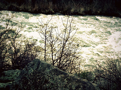 Klamath River rush