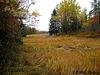Marsh & Woods near Timber Cove, Marshville ME