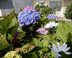 bouquet d'été