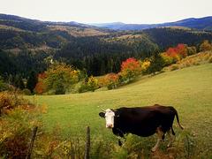 Festival of autumn colors