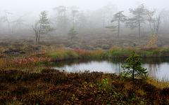 Ein Nebeltag im Hochmoor - A foggy day in a high moor - mit PiPs