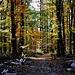 Herbstwanderung - Autumn hike