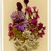 Alpenblumen (Alpine Flowers)