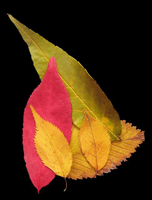 """Bay Ridge Autumn"""