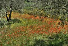 Landscape near Scicli
