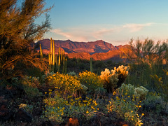 Ajo Mountains