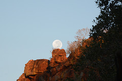 Namibia, The Morning Moon Sat on the Cliff of the Waterberg Plateau