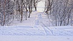 (2) ...führt auch ein Weg dorthin... / ...a path leads to...