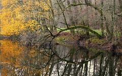 Les marais de Saone près de Besançon