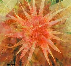 Fiore di Cactus allo Specchio.