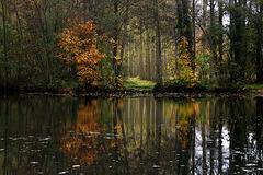 Au bord de l'étang à Morancez ( 28 )