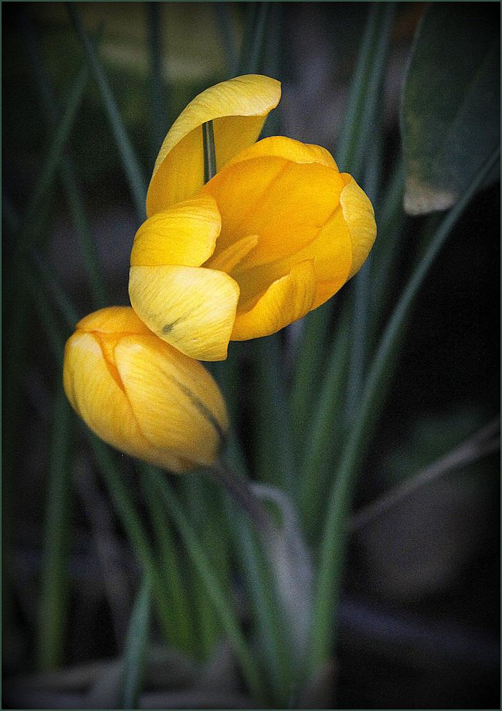 Une fleur par jour.... - Page 3 41213162.dc5a9347.1024