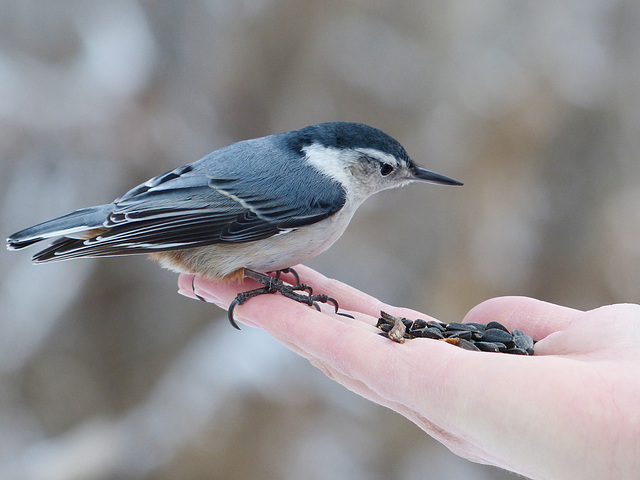 A bird in the hand is worth many in the bush