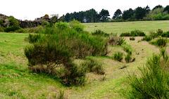 DE - Schleiden - Near Vogelsang