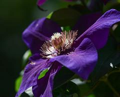 p-purplepatio