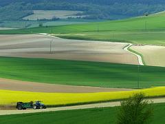 les champs en Pays de Bray (Seine-Maritime)