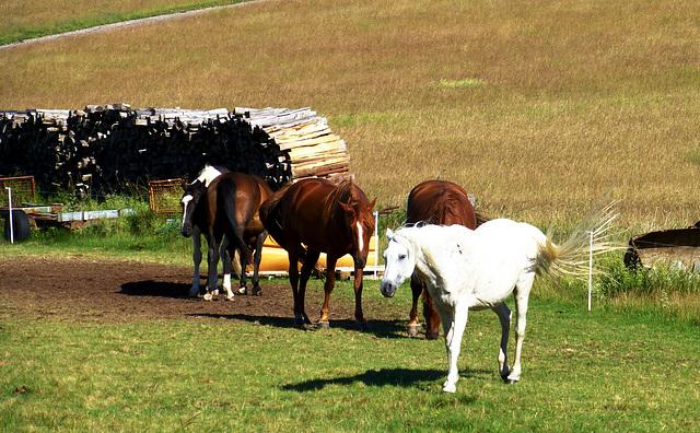 DE - Lind - Diese Pferde leben sehr idyllisch