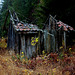 Derelict outhouse