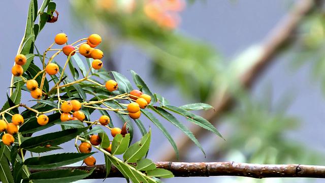 Baum vorm Fenster - Der Herbst kommt!