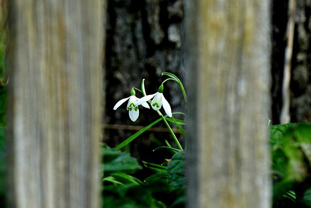 Ein Blick in Nachbars Garten - A view into neighbor's garden