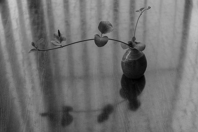 Grass in a vase
