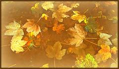 Colours of a wet autumn