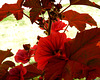 Red Leaf,,,Purple Flowers