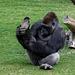 Yogī - der Meister des Yoga (© Buelipix)