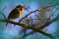 Robin, R.G.