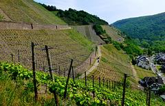 DE - Dernau - Auf dem Rotweinwanderweg