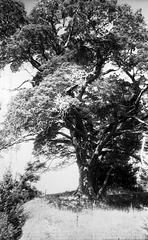 Tarzan In Ludd Valley