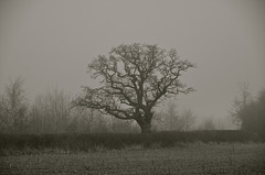 Misty Gnosall fields