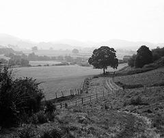 Derbyshire (Nettar 4)