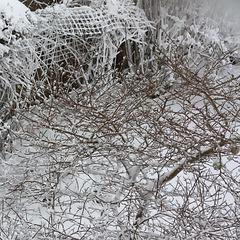 IMG 7167 winter