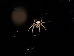SpiderMoon1114 02