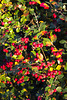 Berries in the spotlight 2