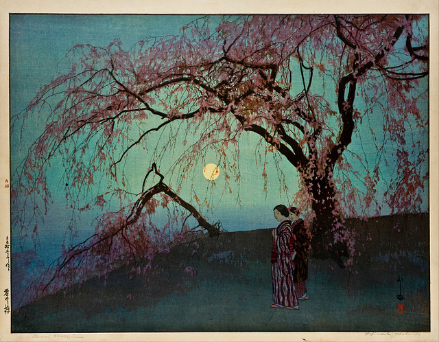 Kumoi Cherry Trees