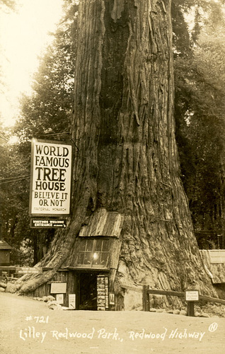 World Famous Tree House (Cropped)