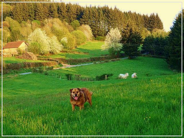 DANA: La balade du chien heureux... [ON EXPLORE]