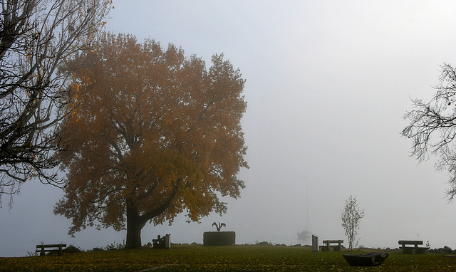 Brouillard sur le lac