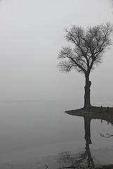 Der einsame Baum am Seeufer