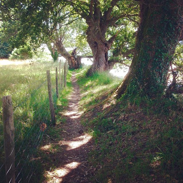 Le chemin des Elfes