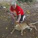 Namibia, The Otjitotongwe Guest Farm, Great Pleasure - to Stroke a Cheetah