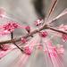 Blüten _EXPLOSION