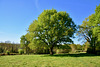 Limousin 2017 – Oak