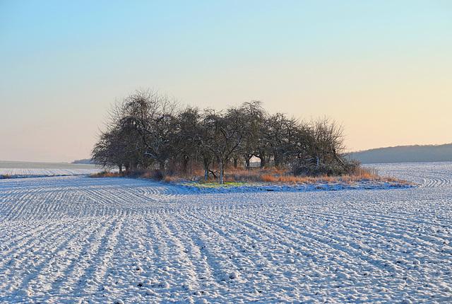 Einsamer Obstgarten in Winterlandschaft - Lonely orchard in a winter landscape